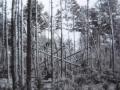 Zdjęcie przedstawiające las i połamane drzewa