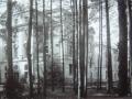 Zdjęcie przedstawiające budynek główny zza drzew